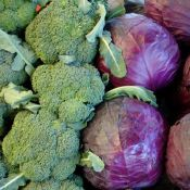 53af242a0fdf0_-_rby-33-foods-stay-young-broccoli-red-cabbage-de